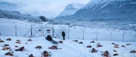 reindeermurder