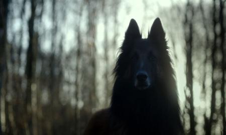 shelley-dog
